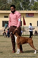 amritsar-kennel-club_105.jpg