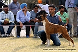 amritsar-kennel-club_109.jpg