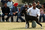 amritsar-kennel-club_111.jpg
