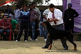 amritsar-kennel-club_115.jpg