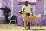 amritsar-kennel-club_128.jpg