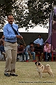 amritsar-kennel-club_13.jpg