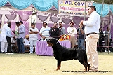 amritsar-kennel-club_155.jpg