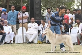 amritsar-kennel-club_163.jpg