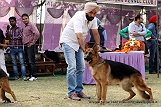 amritsar-kennel-club_167.jpg
