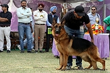 amritsar-kennel-club_175.jpg