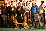 amritsar-kennel-club_211.jpg