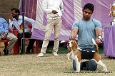 amritsar-kennel-club_29.jpg