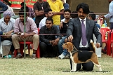 amritsar-kennel-club_34.jpg