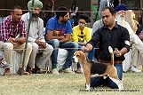 amritsar-kennel-club_37.jpg