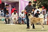 amritsar-kennel-club_43.jpg