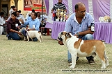 amritsar-kennel-club_47.jpg