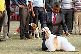 amritsar-kennel-club_53.jpg