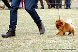 amritsar-kennel-club_6.jpg