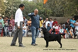 amritsar-kennel-club_72.jpg