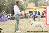 amritsar-kennel-club_79.jpg