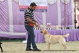 amritsar-kennel-club_85.jpg