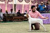amritsar-kennel-club_95.jpg