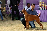 amritsar-kennel-club_98.jpg