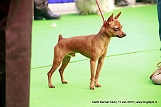 delhi-kennel-club1421134449.jpg