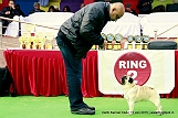 delhi-kennel-club1421134591.jpg
