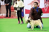 delhi-kennel-club1421134615.jpg
