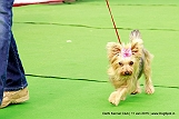 delhi-kennel-club1421134623.jpg