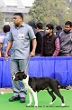 delhi-kennel-club1421134636.jpg