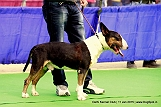 delhi-kennel-club1421134668.jpg