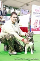 delhi-kennel-club1421134687.jpg