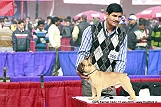 delhi-kennel-club1421136677.jpg