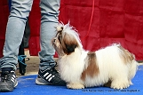 delhi-kennel-club1421136876.jpg