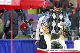 delhi-kennel-club1421136984.jpg