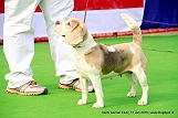 delhi-kennel-club1421137092.jpg