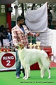 delhi-kennel-club1421137128.jpg