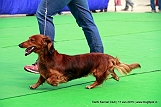delhi-kennel-club1421137157.jpg