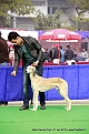 delhi-kennel-club1421137246.jpg