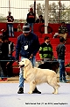 delhi-kennel-club1421137441.jpg