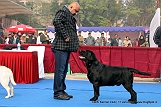 delhi-kennel-club1421137458.jpg