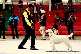delhi-kennel-club1421137561.jpg