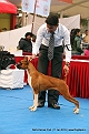 delhi-kennel-club1421137971.jpg