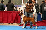 delhi-kennel-club1421137996.jpg