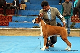 delhi-kennel-club1421138013.jpg