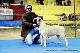 delhi-kennel-club1421138030.jpg