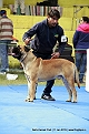 delhi-kennel-club1421138068.jpg