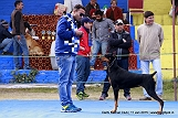 delhi-kennel-club1421138092.jpg