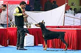 delhi-kennel-club1421138174.jpg