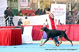 delhi-kennel-club1421138222.jpg