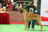 delhi-kennel-club1421138265.jpg