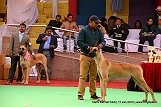 delhi-kennel-club1421138274.jpg
